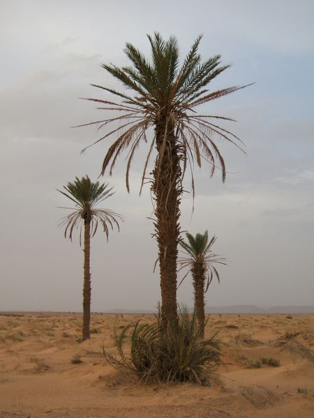 bioma gurun