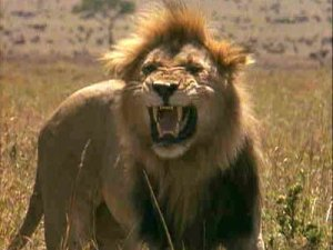 Singa