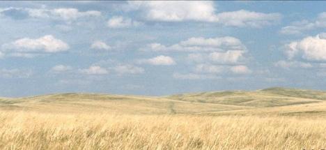 Padang rumput tanpa diselingi kumpulan pepohonan