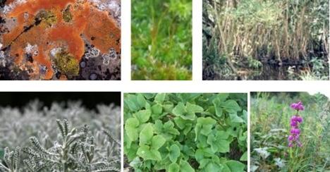 Alga, kerak, rumput teki, rumput kapas, terna dan ericcaceae