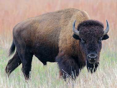 Fauna Neartik Blog Guru Geografi Man 1 Gunungkidul