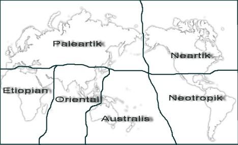 Wilayah persebaran fauna di dunia