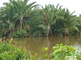 Hutan Sagu