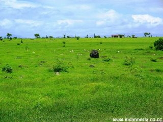 Sabana Tropis di Nusa Tenggara