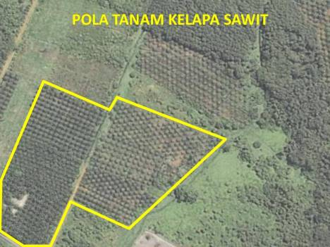 Perkebunan kelapa sawit terlihat teratur pada pola tanam dan jarak antar tanamannya.